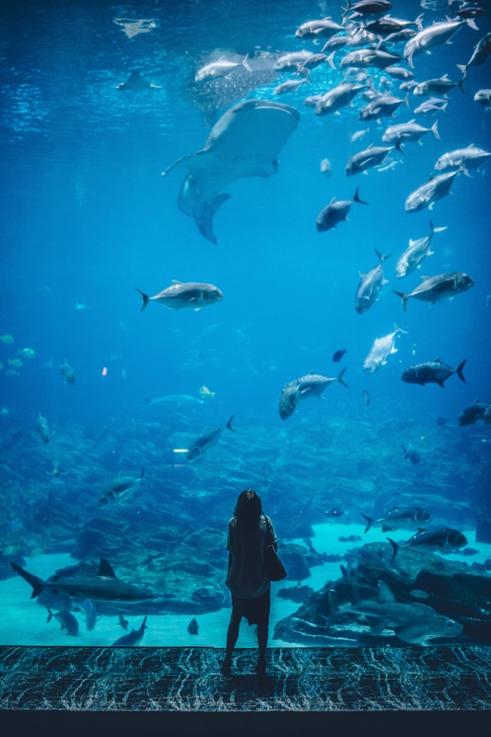 Haibecken Wasser