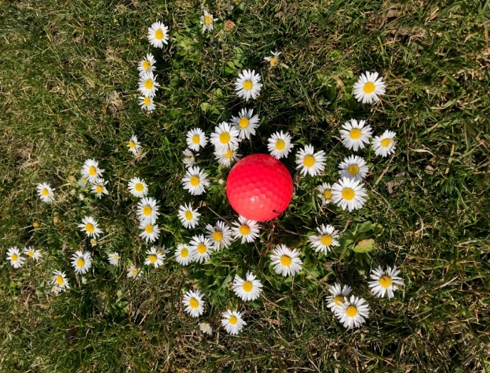 Gänseblümchen roter Golfball